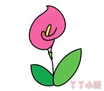 马蹄莲的画法步骤涂色 马蹄莲简笔画图片